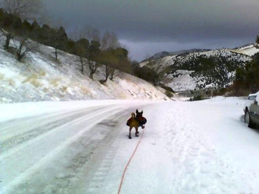 dog running down road