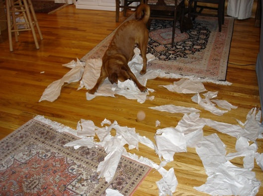 dog having fun tearing up paper