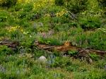 wildflowers with log