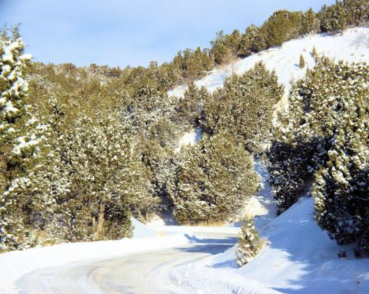 image of snowy road with juniper trees