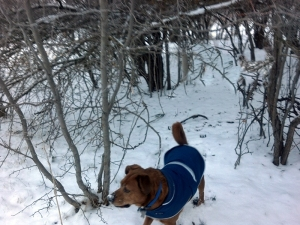 dog coming out from under twigs
