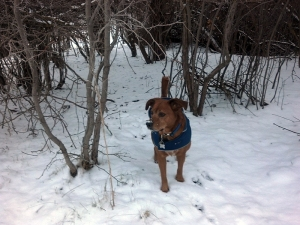 dog coming out from under twigs on a trail