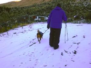 dog and man walking in snow toward car