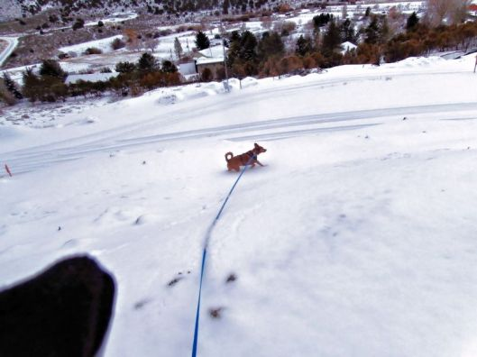 dog walking in the snow below the photographer