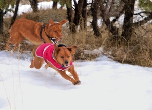 dogs playing chase in snow