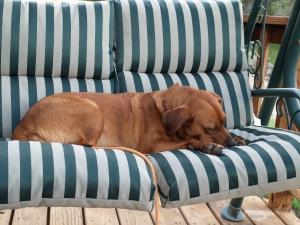 dog sleeping an outdoor swing