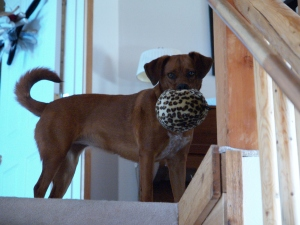 dog at top of stairs with a ball i her mouth