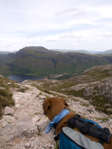 Dog on rocky trail peering down the hill toward a tarm with mountains in background