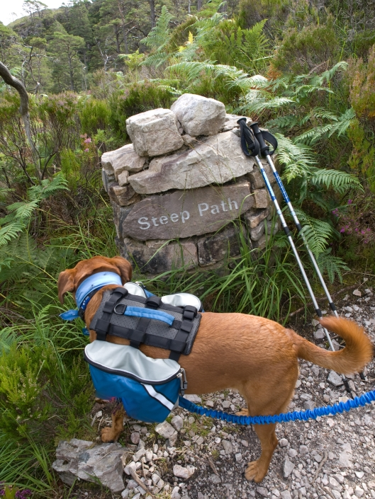 sophie gazingf down trail