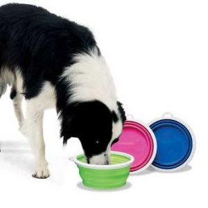 dog drinking out of lime green pop-up bowl