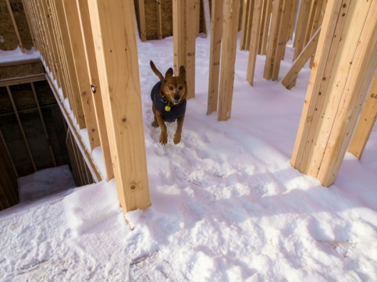 dog running through what will be a hall in snow covered house construction site