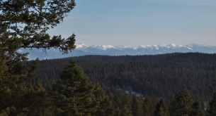 view across tree filled valley to snow capped mountains