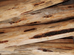 close up shot of details of wood on log stairs which are not identifiable at this close range