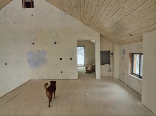 dog walking across floor toward door to next room in house under construction
