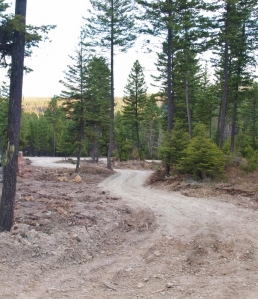 looking down a winding dirt driveway with evergreen trees and rough spring ground on one side
