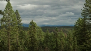 senic shot with evergreen trees in the foreground and leaden storm clouds hanging over tall mountains in the long view