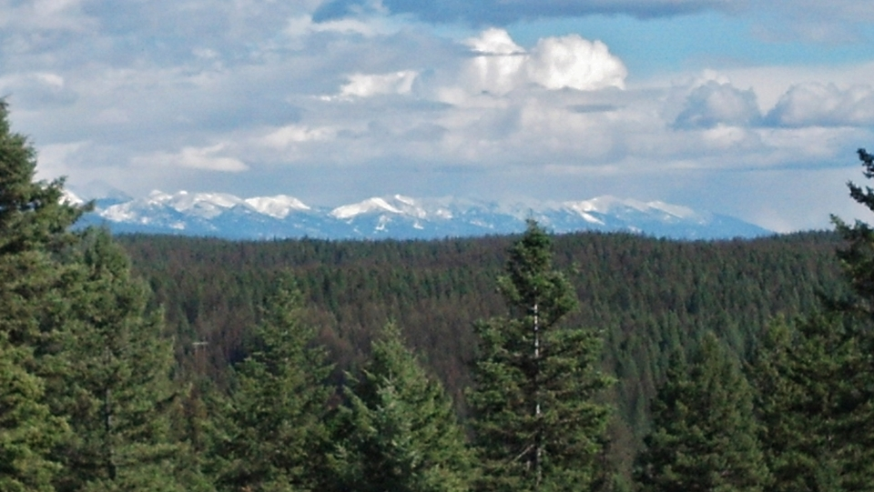 senic shot with evergreen trees in the foreground and all mountains in the long view
